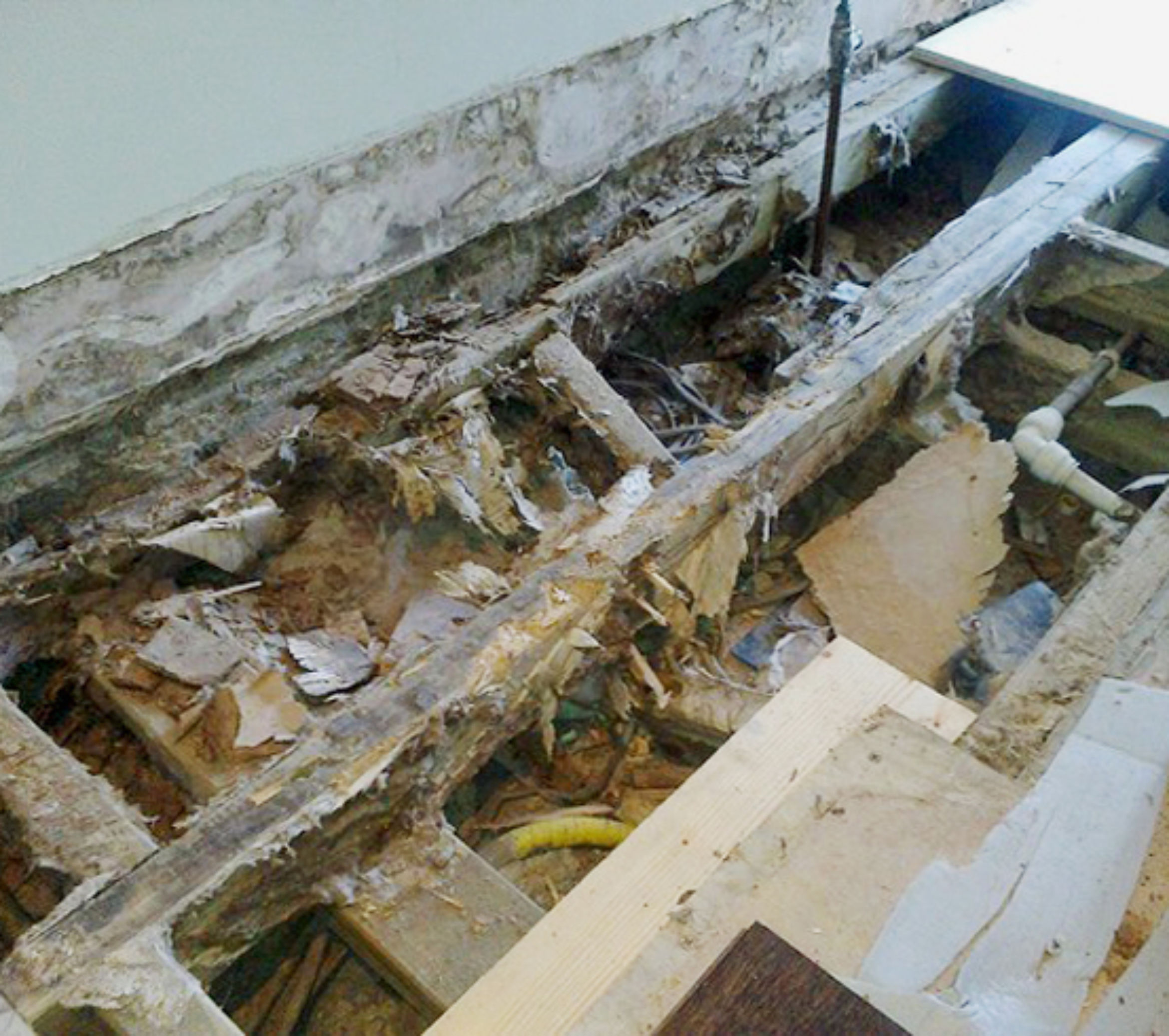 dry rot outbreak