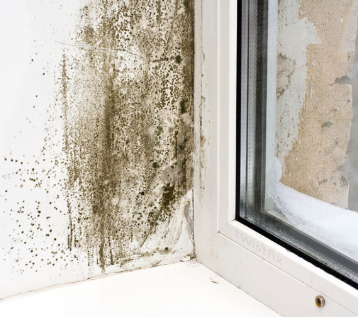 Mould-on-wall